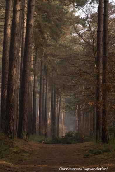 Ourneverendingwanderlust Kloosterbos-5626