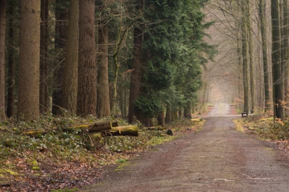 Ourneverending wanderlust Hallerbos-9060
