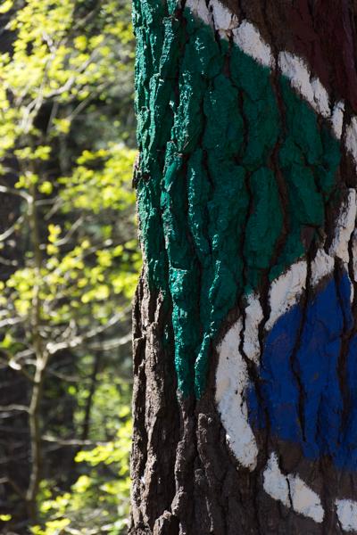 Ourneverending wanderlust Oma Forest-1700