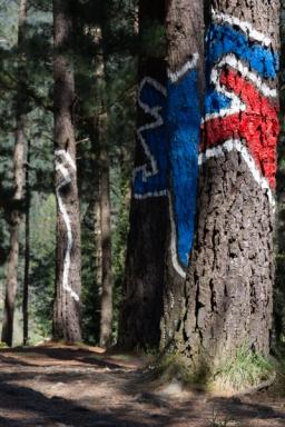 Ourneverending wanderlust Oma Forest-1728