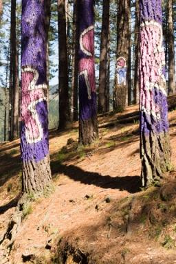 Ourneverending wanderlust Oma Forest-1758