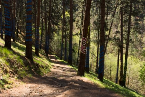 Ourneverending wanderlust Oma Forest-1761