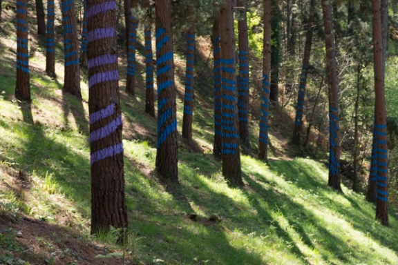 Ourneverending wanderlust Oma Forest-1764