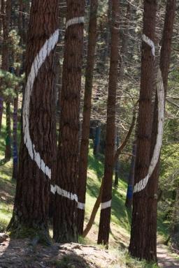 Ourneverending wanderlust Oma Forest-1767