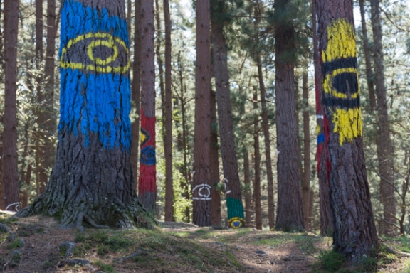 Ourneverending wanderlust Oma Forest-1782