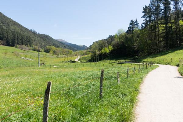 Ourneverending wanderlust Oma Forest-1787